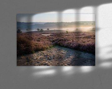 Heide op de Posbank, Rheden von Jeffrey de Graaf