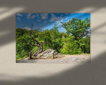 Landschaft mit Bäumen und Felsen im Harz sur Rico Ködder