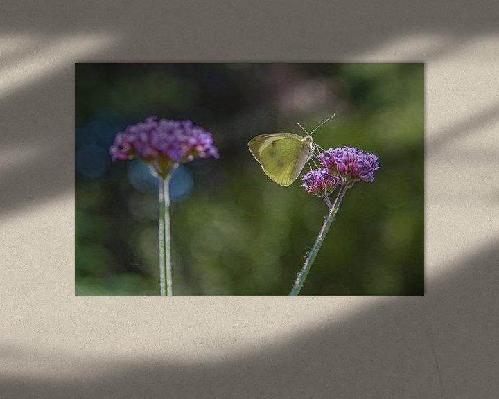 Beispiel: Schmetterling auf Blume von Leo Luijten