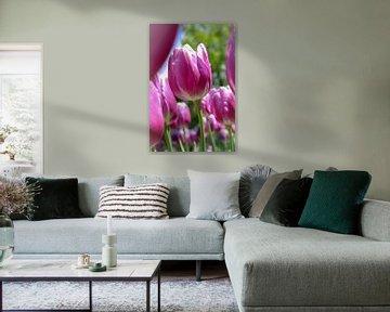 Paarse tulpen von Lindi Hartman