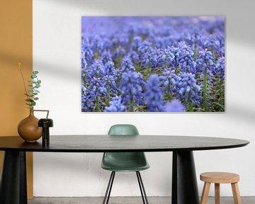 Blauwe druifjes von Lindi Hartman