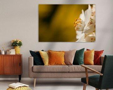 Macro opname van witte bloem op gele achtergrond