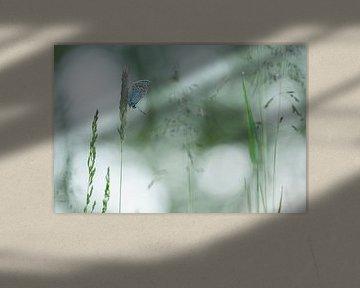 Icarusblauwtje - Common Bleu  van Aukje Ploeg