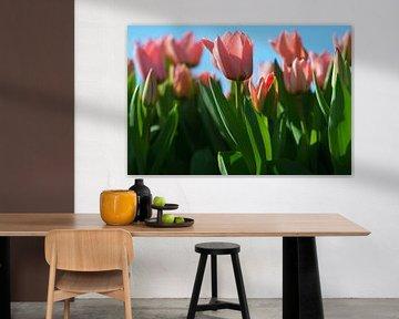 Tulpen op de geestgronden bij Lisse von Georges Hoeberechts