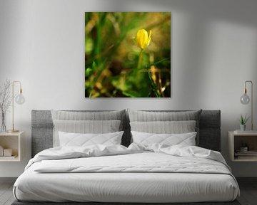 ontwakende lente in close up von Georges Hoeberechts