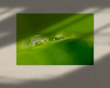 Druppels in het groen van Henriëtte van Golde