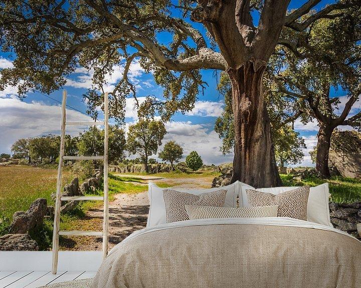 Beispiel fototapete: Cork oak  von Anneke Hooijer