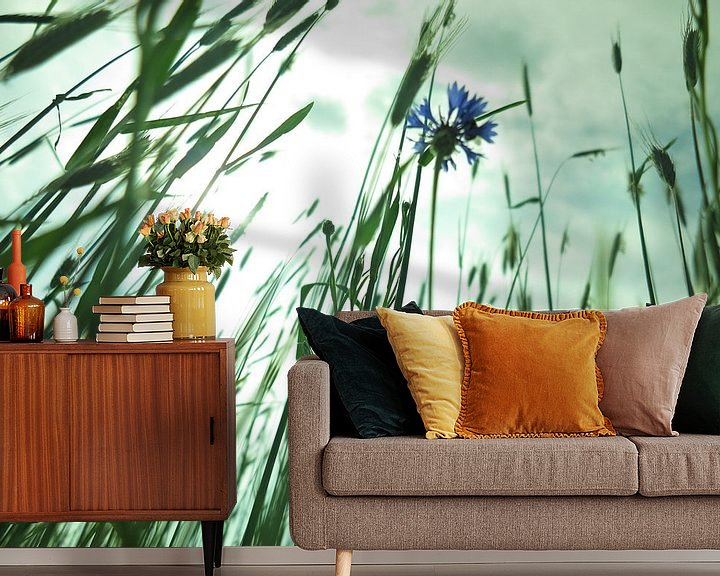Sfeerimpressie behang: Korenbloem in tegenlicht. van timon snoep