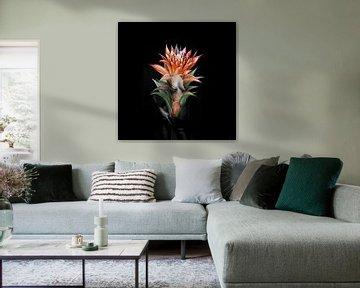 Erotic Guzmania flower von Dreamy Faces