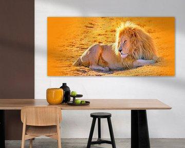 Löwen Männchen 900 thula-art panorama