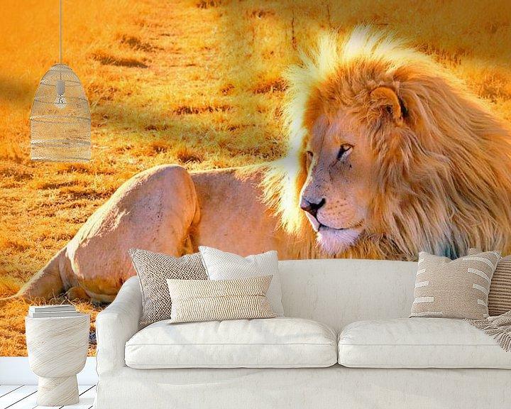 Beispiel fototapete: Löwen Männchen 900 thula-art panorama von Barbara Fraatz