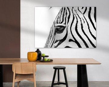 Zebra sw 1070700