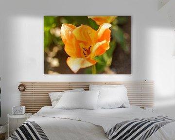 Tulipan van Dawid Baniowski