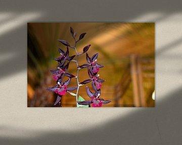 Orchidea van Dawid Baniowski