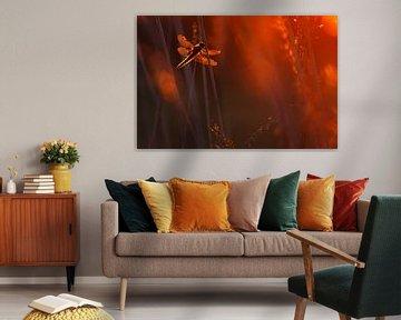 Libelle von Pim Leijen