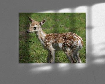 young Fallow deer (dama dama) von michael meijer