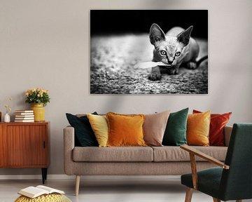 Sphynx cat von Sran Vld Fotografie