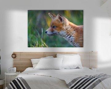 portret van een jonge vos von Pim Leijen
