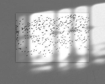 Schwarm von Pfuhlschnepfe von Marianne Twijnstra-Gerrits