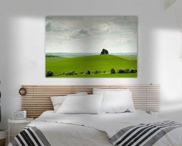 Boom op heuvel in het glooiende lentegroene Engelse landschap
