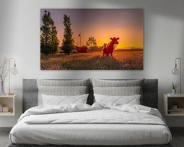 Rode koeien in Maassluis tijdens zonsondergang van Nathan Okkerse