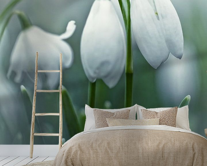 Sfeerimpressie behang: Silky Snowdrops (bloem, sneeuwklokje) van Bob Daalder