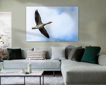 Grauwe gans in vogelvlucht van Fotografie Jeronimo