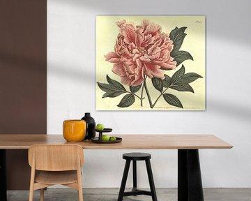 Vintage print met bloem (paeonia suffruticosa)