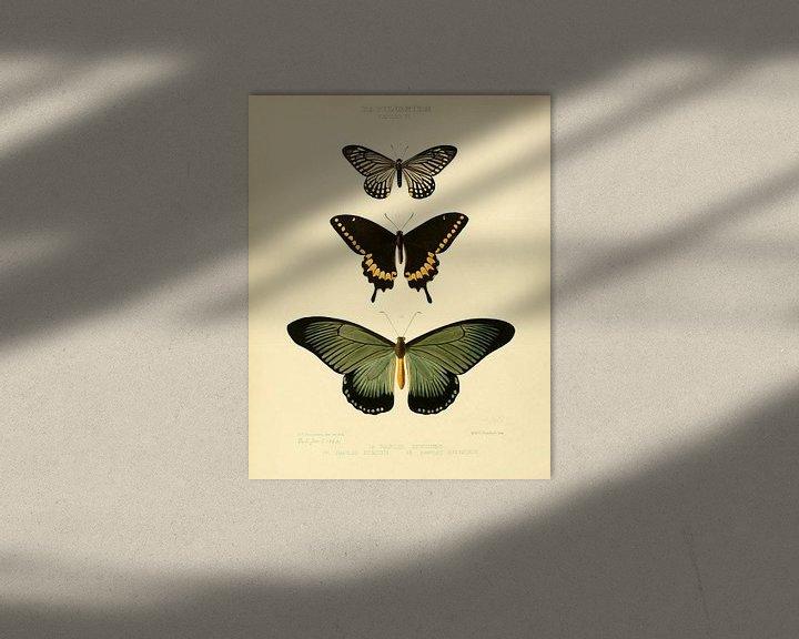 Sfeerimpressie: Vintage vlinder illustratie