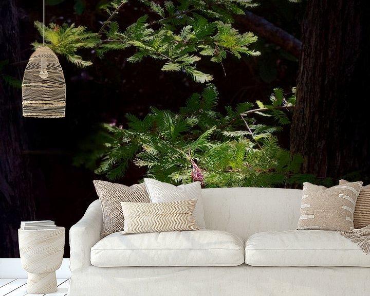 Sfeerimpressie behang: 4551-Cypress boomtak van Rudy Umans