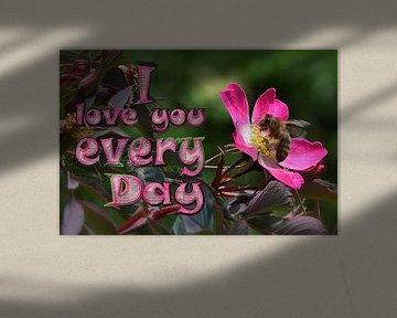 I love you every day van Christine Nöhmeier
