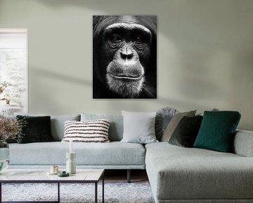 Porträt Schimpanse von MSP Canvas