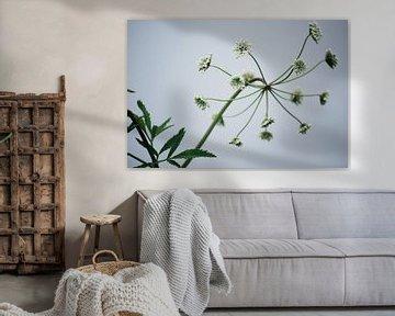 Natur - Uferpflanze von Margreet Boersma
