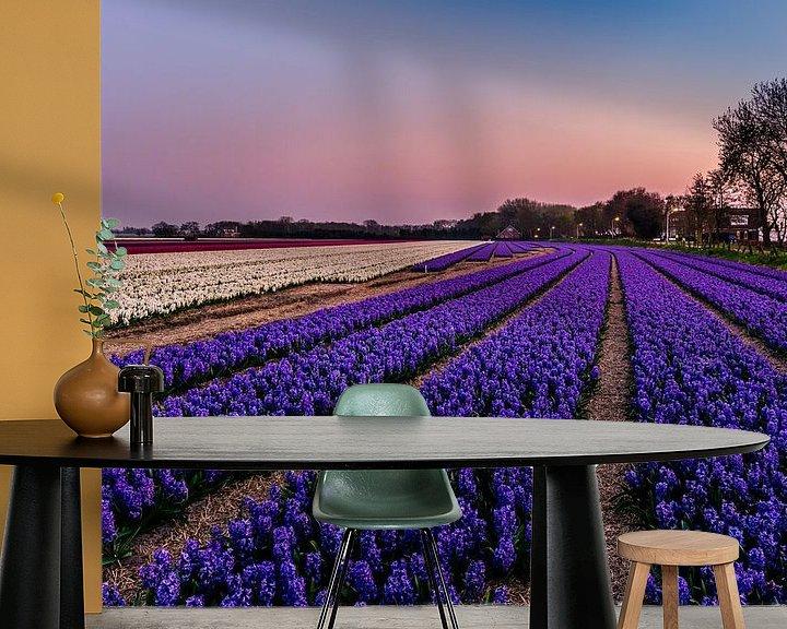 Sfeerimpressie behang: Hyacinth fields in Noordwijk at Springtime! van Carla Matthee