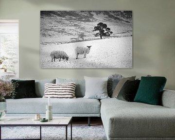 Sheep, snow, tree von Luis Boullosa