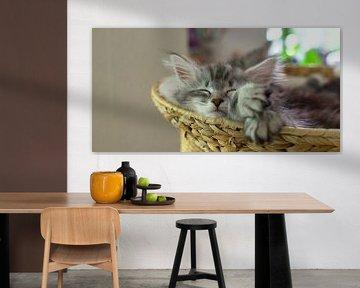 Schlafendes Katzenjunges/ Entspanntes Katzenbaby van Thomas Wagner