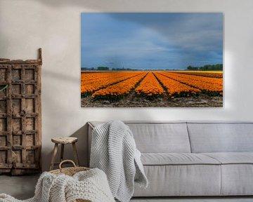 Bandes de tulipes orange sur Patrick Verhoef