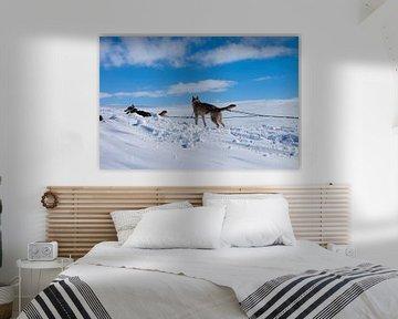 Nationaal park Hardangervidda van Sander Monster