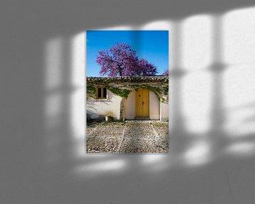 Oud huis met bloesemboom op Sicilië van Pieter Tel