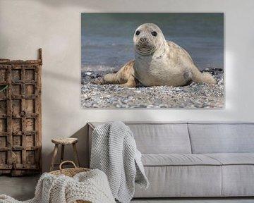 Zeehond von Hannie Heere