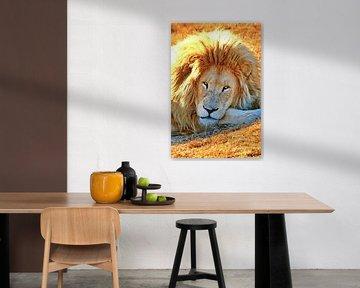Löwen Portrait digiart von Barbara Fraatz