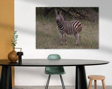 Zebra in kleur von Wesley Klijnstra