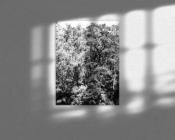 Tree Magic 191-B von MoArt (Maurice Heuts)