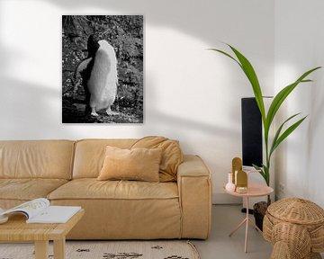 Douchende Rockhopper Pinguin - Zwart & Wit von Remco van Kampen