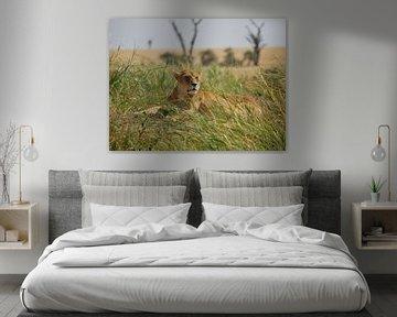Leeuw in het gras von Remco van Kampen
