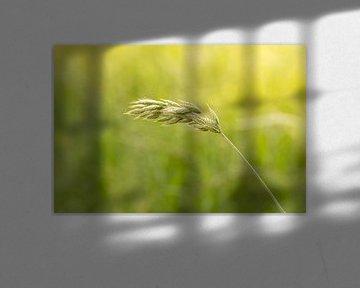 Blühendes Gras   Sommertag   goldene Stunde von Marianne Twijnstra-Gerrits