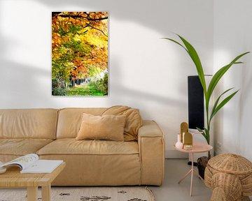 Bäume im Herbst sur Lars Tuchel