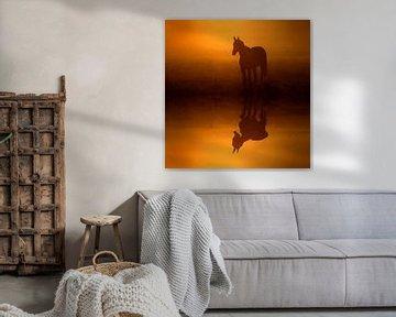 Pferd im Nebel von Lars Tuchel