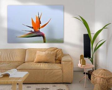 Paradijsvogelbloem von Michelle Boot
