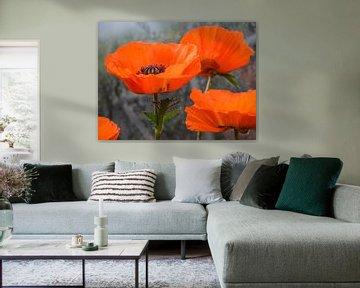 Poppies van Annelies Martinot